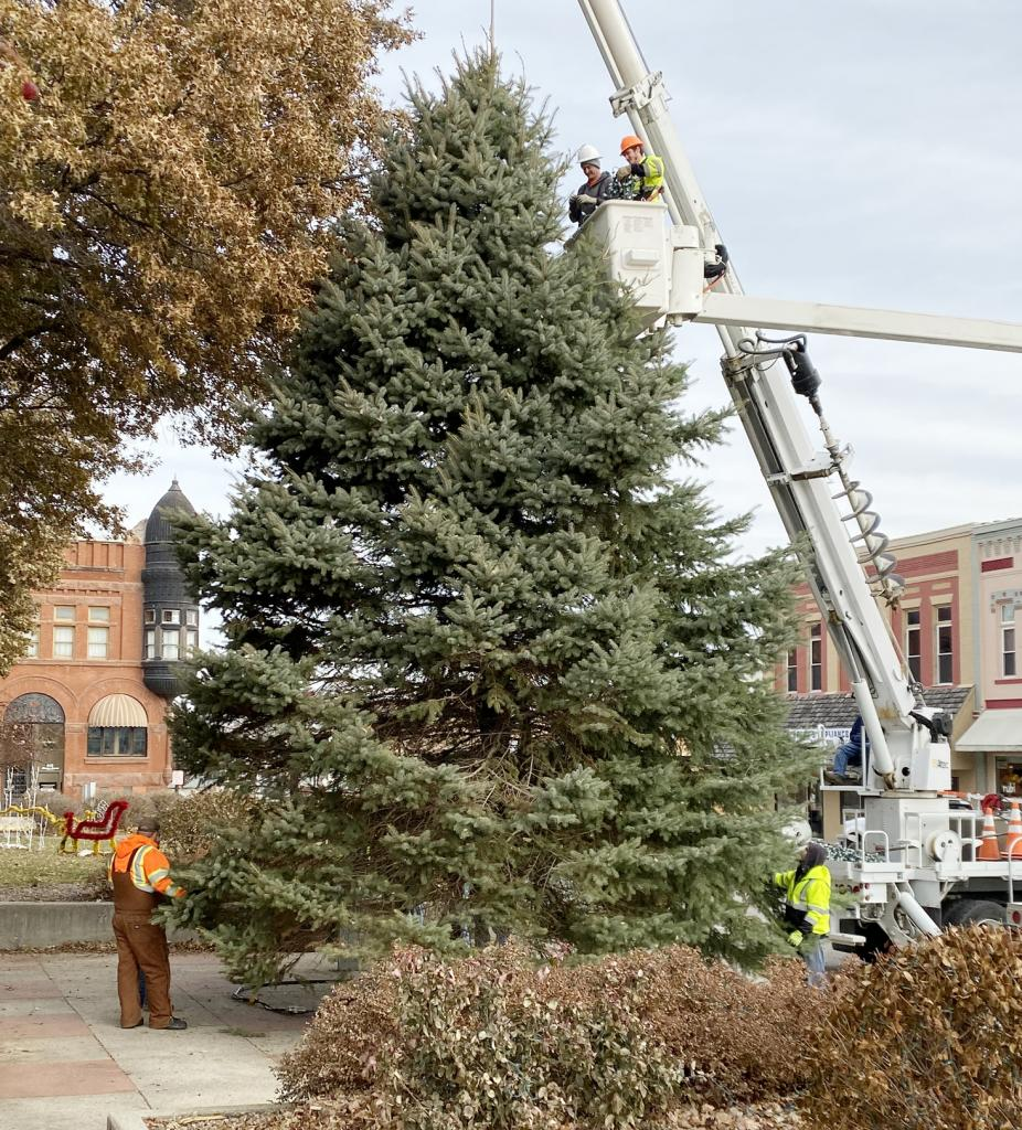 Harlan Municipal Utilities and City of Harlan crews put the official Shelby County Christmas Tree in place and strung it with lights Wednesday, Nov. 20 on the east side of the courthouse square.  The tree will light up and kick off the season at the annual holiday lighting festival slated for Saturday, Nov. 30.  The tree this year was donated by Mark Rasmussen. (Photo by Alan Mores)