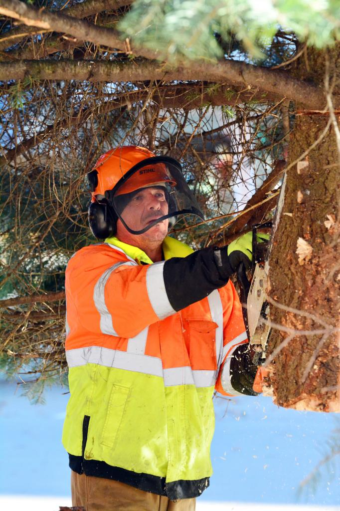The City of Harlan's Jeff<br />Musich trims the bottom of the official Shelby County Christmas tree before it's put in place on the courthouse square last week.