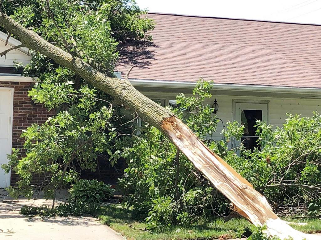 The team helped clear this tree from a home.