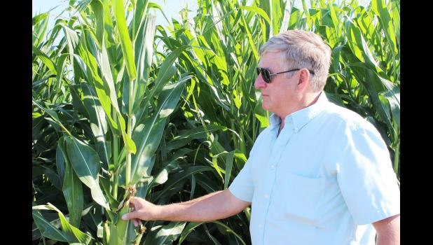 Randy Pryor stands, holding one of the ears of corn on his crop.  Pryor tests out different strands of seed to see the varying yields.