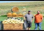 Doug (left) and Justin Schwery have been working hard on the development of the pumpkin patch, which is complete with animals, a kids playground, hay rides, a corn maze, and a large area for families and kids to pick out their favorite pumpkins for the fall season.