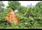 A tree at the corner of 10th and Willow Sts. in Harlan was toppled during Tuesday's storm.  (Photo by Jacey Goetzman)